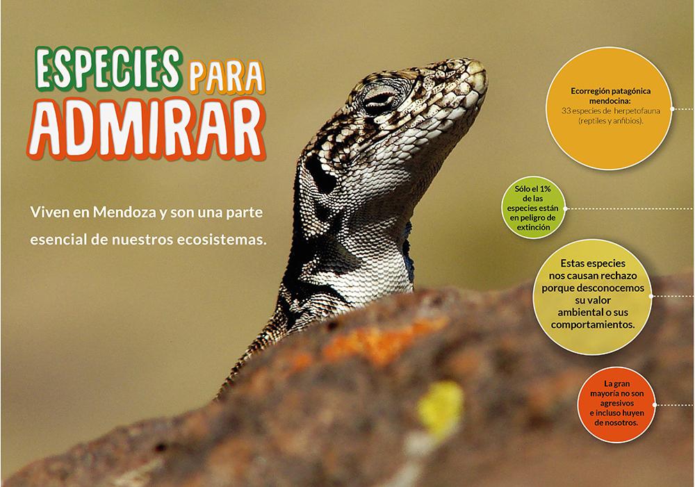 afiche lagartos