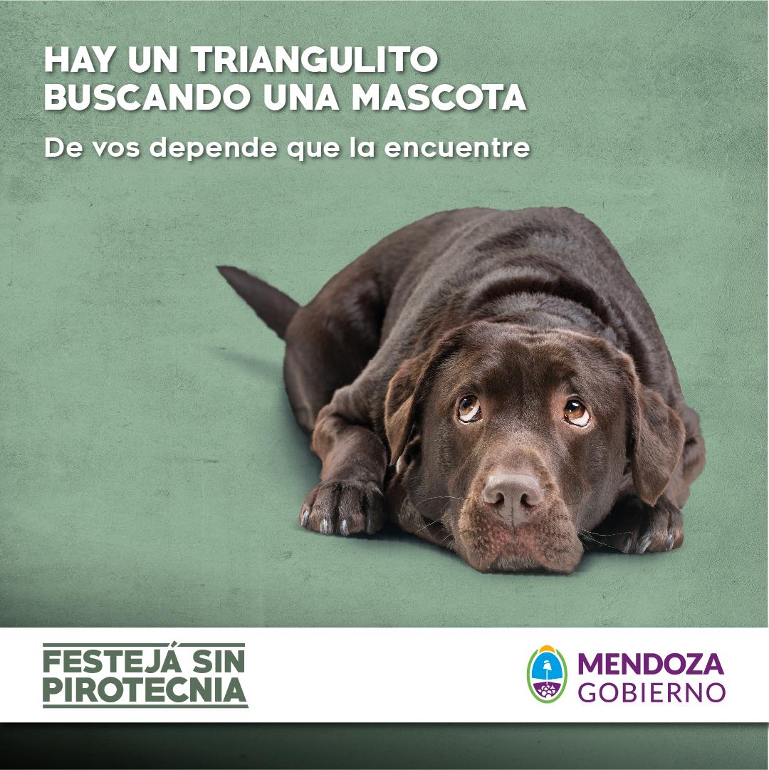 Gobierno - Festeja Sin Pirotecnia - Aviso_Redes Sociales - 1080 x 1080 px-14