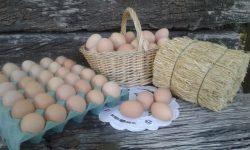 economía social huevos-caseros-familia-Navarro-1-1