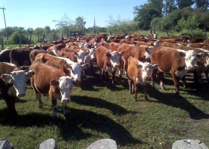 Pese a la sequía histórica, la ganadería en Mendoza muestra proyecciones alentadoras