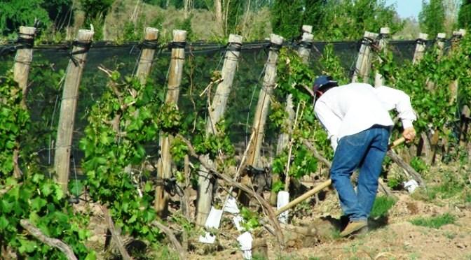 Seguro Agrícola: comenzó el cronograma de pagos compensatorios