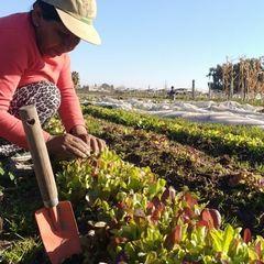 Mendoza busca continuar incrementando su producción orgánica